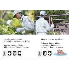 (2016-4502)埼玉福祉会SAIFUKU仕事に行ってきます〔2〕「動物園で、そうじの仕事—義信さんの1日」/やさしくよめる本-LLブック