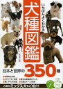 いちばんよくわかる犬種図鑑 日本と世界の350種/奥田香代【1000円以上送料無料】