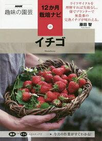 イチゴ/藤田智【1000円以上送料無料】
