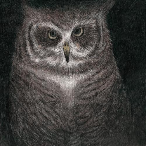 フクロウの声が聞こえる(完全生産限定盤)/小沢健二とSEKAI NO OWARI
