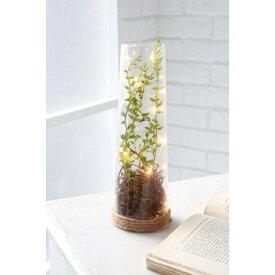 LED トールルートポット QM-07 □□ CL1 COVENT GARDEN 照明 ライト 置物 インテリア フェイクグリーン 造花 オブジェ かわいい アンティーク調 コベント ガーデン プレゼント