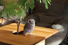 BIRDIE BILL BURROWING OWL 2370 □□ BR5 magnet アナホリ フクロウ キュート ディスプレイ 動物 鳥 オブジェ 置物 磁石 おしゃれ インテリア ガーデン バード マグネット コレクション インスタ 雑貨 プレゼント