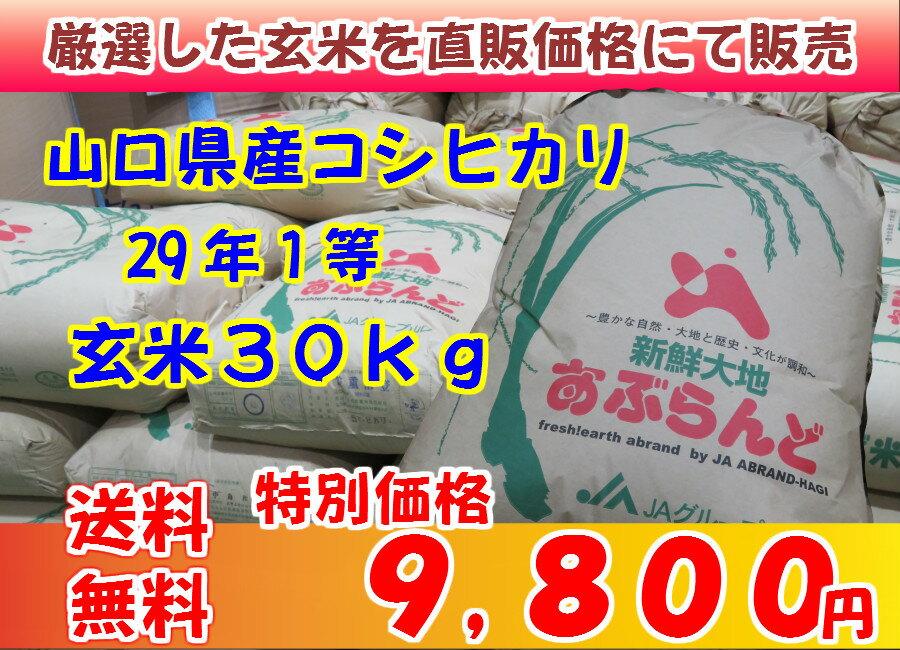 玄米 山口県産コシヒカリ29年1等 玄米30kg 送料無料(但し北海道・沖縄・離島を除く)