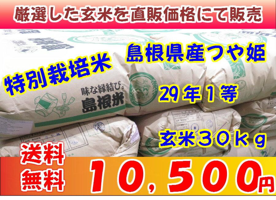玄米 特別栽培米 島根県産つや姫29年1等 玄米30kg 送料無料(但し北海道・沖縄・離島を除く)