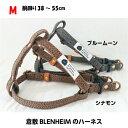(M)倉敷BLENHEIM 帆布 ハーネス シナモン ブルームーン幅15mm胴回り38〜55cm おしゃれ