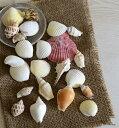 2袋セット【ゴロゴロ貝殻ミックス】手作りキット、出来上がり完成品との同時購入割引で500円オフ■手作りキット 貝殻■貝がら アソー…