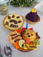 犬用ケーキ シュークリームのプチケーキの3点セット(ワンコケーキ 犬用ケーキ 犬の誕生日 犬のおやつ 犬のお祝い 犬のプレゼント)