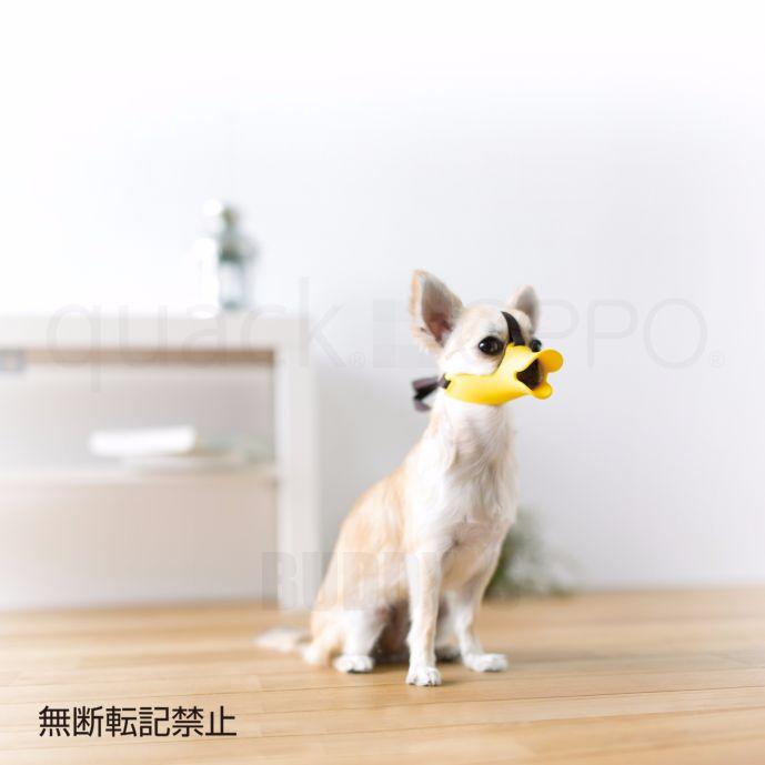口輪に見えない口輪 拾い食い・無駄吠え・噛み付き防止に。[正規品] OPPO(オッポ) quack(クァック)サイズSS [全3色]【犬/しつけ/口輪/小型犬/噛みグセ】