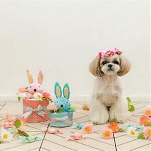 『ペットシーツケーキ』 sサイズ 全2色犬 玩具 おもちゃ トーイ おしゃれ かわいい ペットグッズ 犬グッズ ペット用品 お祝い FAD ペットシーツ ケーキ 誕生日 ご褒美 記念日 ギフト プレゼ