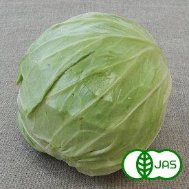 [有機栽培]キャベツ(1玉)