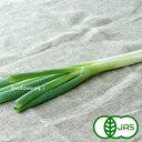 [有機栽培] 白ねぎ (300g)