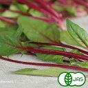 [有機栽培] 赤軸ほうれん草 (130g)