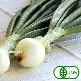 [有機栽培] 葉っぱつきサラダ玉ねぎ (500g)