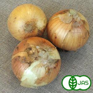 [有機栽培] 玉ねぎ (5kg)