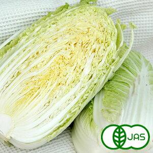 [有機栽培] 白菜 (1玉)
