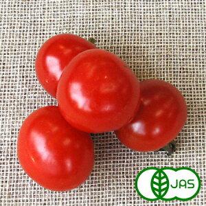 [有機栽培] ミニトマト (100g)