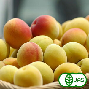 [有機栽培] 熊代農園の完熟梅 (5kg) 産地直送/他商品との同時注文不可