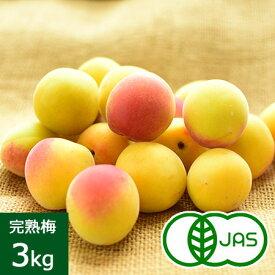 [有機栽培] 熊代農園の完熟梅 (3kg) 産地直送/他商品との同時注文不可/代金引換不可