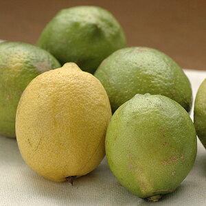 特別栽培 レモン (10kg) 減農薬/低農薬/エコファーマー
