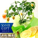 父の日 ギフト 送料無料 プレゼント 果樹鉢 花 アレンジメント レモン ブルーベリー ペピーノ ヒマワリ 楽天総合1位 …