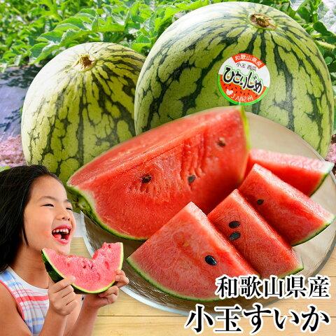 美味しい小玉スイカ!和歌山県産ひとりじめスイカ