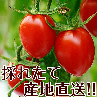 ミニトマトあいこ(アイコ)2kg【送料無料】和歌山のエコファーマーが減農薬・減化学肥料で作るこだわりの果肉・栄養たっぷりの美味しさ