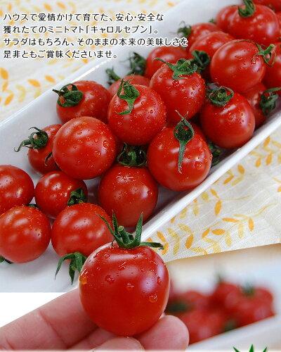 ミニトマトキャロルセブン2kg【送料無料※北海道、沖縄を除く】減農薬・減化学肥料で栽培する、驚きの糖度と絶妙のコク、濃厚な風味が余韻を引く美味しいトマト