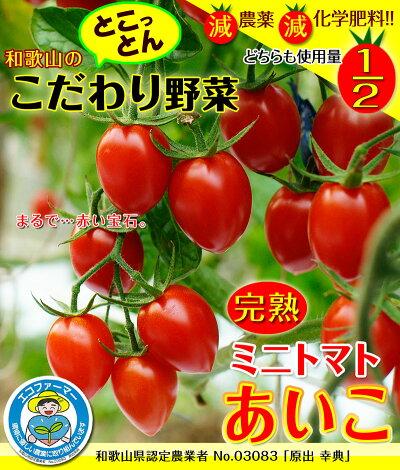 こだわりのミニトマト生産者原出さま