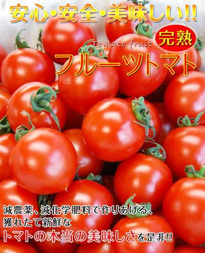 フルーツトマト1kg(送料無料)匠の里紀州假家英明が育てる減農薬・減化学肥料栽培、土作りにこだわった安心安全なトマト驚きの糖度とコクが余韻を引く美味しさ