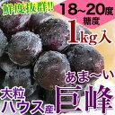 鮮度抜群!朝採り巨峰1kg(2〜4房入)ご予約開始!■ハウス栽培■糖度18〜20度!大変みずみずしく、甘さたっぷりの大粒ぶどう