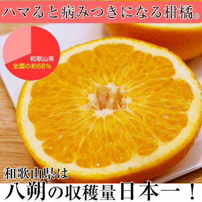 和歌山の美味しい八朔