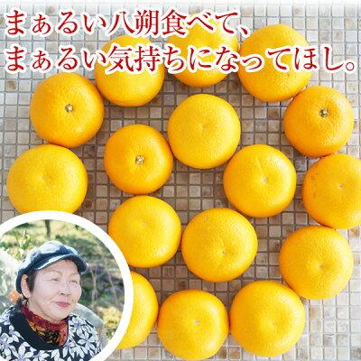 和歌山の八朔(ハッサク)約5kg減農薬・有機肥料栽培【送料無料】L〜2Lサイズ約5kg(16〜18玉)上品な甘み、程よい酸味、独特の苦みが美味しい昔ながらのはっさくです。