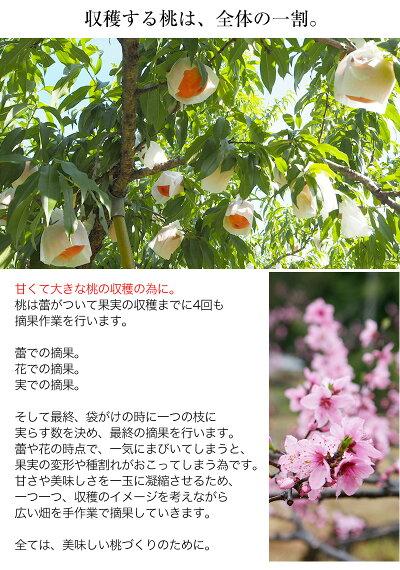 和歌山県高津の桃日川白鳳2kg6〜8玉入
