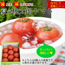 ハウス栽培 桃太郎トマト約1.5kg減農薬・減化学肥料栽培コクがあるのにさっぱり!冷して美味しい旬トマト!