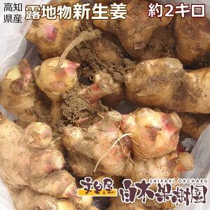採れたて!高知県産ショウガ土付き新生姜約2キロ