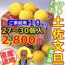 【生産農家直売】土佐文旦家庭用わけあり小々玉Mサイズ10キロ箱【ぶんたん・ブンタン】