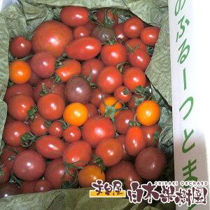 麻岡まるさんちの約40品種のミニトマトの中から選りすぐりの詰め合わせミックスセット