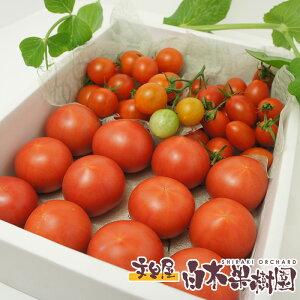 麻岡まるさんちのフルーツトマトとミニトマト詰め合わせセット