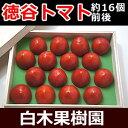 高知県産超高級徳谷トマト【とくたにトマト】 800gフルーツトマト木箱【クール便】