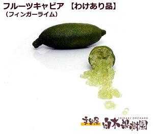 【数量限定】国産フルーツキャビア(フィンガーライム)わけあり約100g【白木果樹園産】