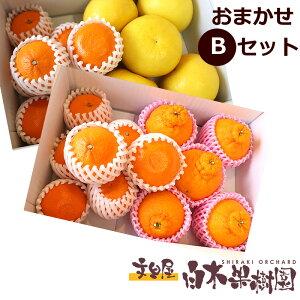 白木果樹園旬のフルーツおまかせセット【Bセット】 果物 詰め合わせ