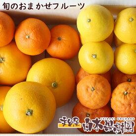 白木果樹園旬のフルーツ食べ比べおまかせセット【Bセット】 果物 詰め合わせ