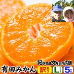 【送料無料】武内さんちの有田みかん