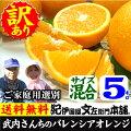 武内さんちのバレンシアオレンジご家庭用サイズ混合5kg有田郡吉備町奥(おき)地区から
