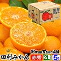 田村みかん/特選ギフト品5kg【Lサイズ】赤秀・贈答品
