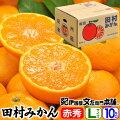 田村みかん/特選ギフト品10kg【Lサイズ】赤秀・贈答品