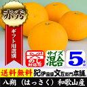 紀州有田産 八朔/ハッサク【秀品】(不選別・買得品5kg)