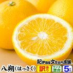 紀州有田産八朔/ハッサク(買得品5kg)ワケアリ果実・ご家庭用
