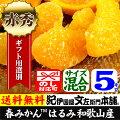 紀州有田産の春みかんはるみ・4.5kg(紀州有田産)サイズ混合果実春みかん・春かんきつ