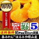 紀州有田産の春みかん はるみ・5kg(紀州有田産) サイズ混合果実 春みかん・春かんきつ
